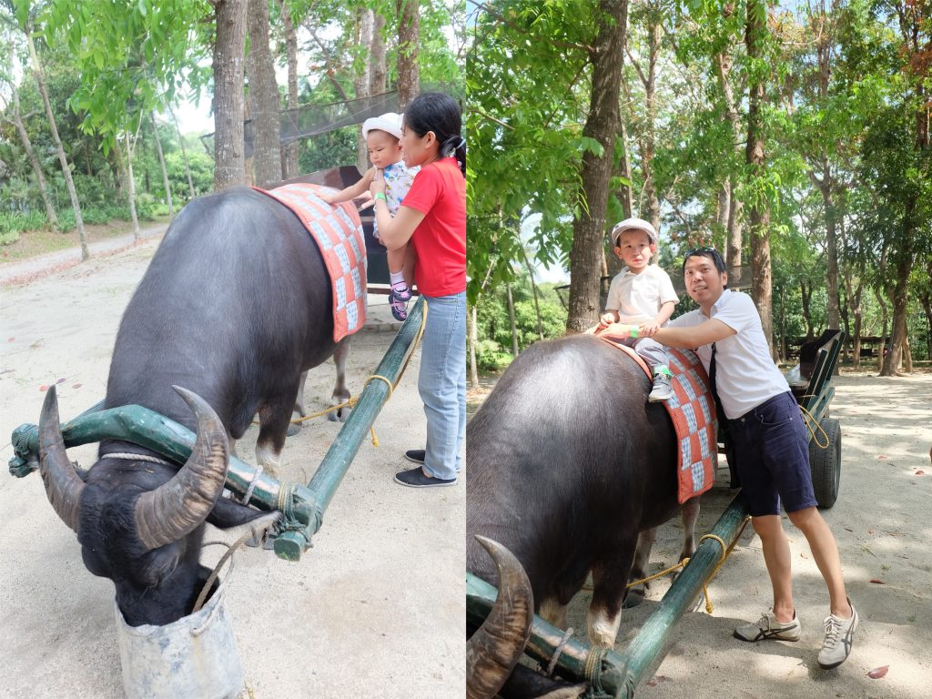 carabao riding kids fun farm